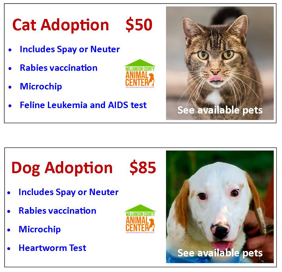 1cat adoption dog adoption w fees graphic_1