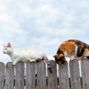 View of two stray cats standing on a fence during a sunny day.