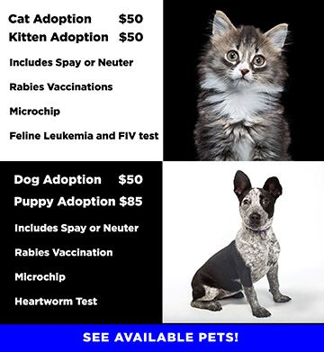 Adoption Fees Graphic with a photo of a cat or dog