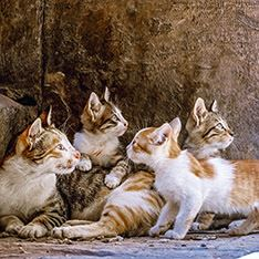 A stray mother cat and kittens