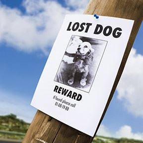 Image of a lost pet poster pinned to a telephone phole