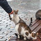 A group of stray cats being fed by a person