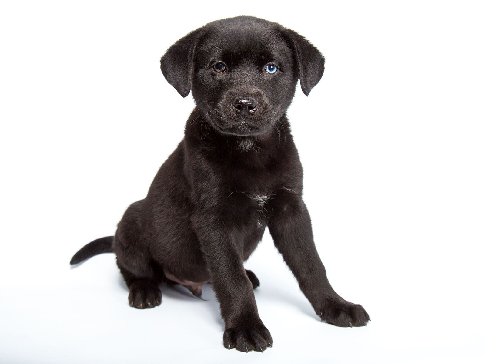 A photo of a black mixed breed puppy.